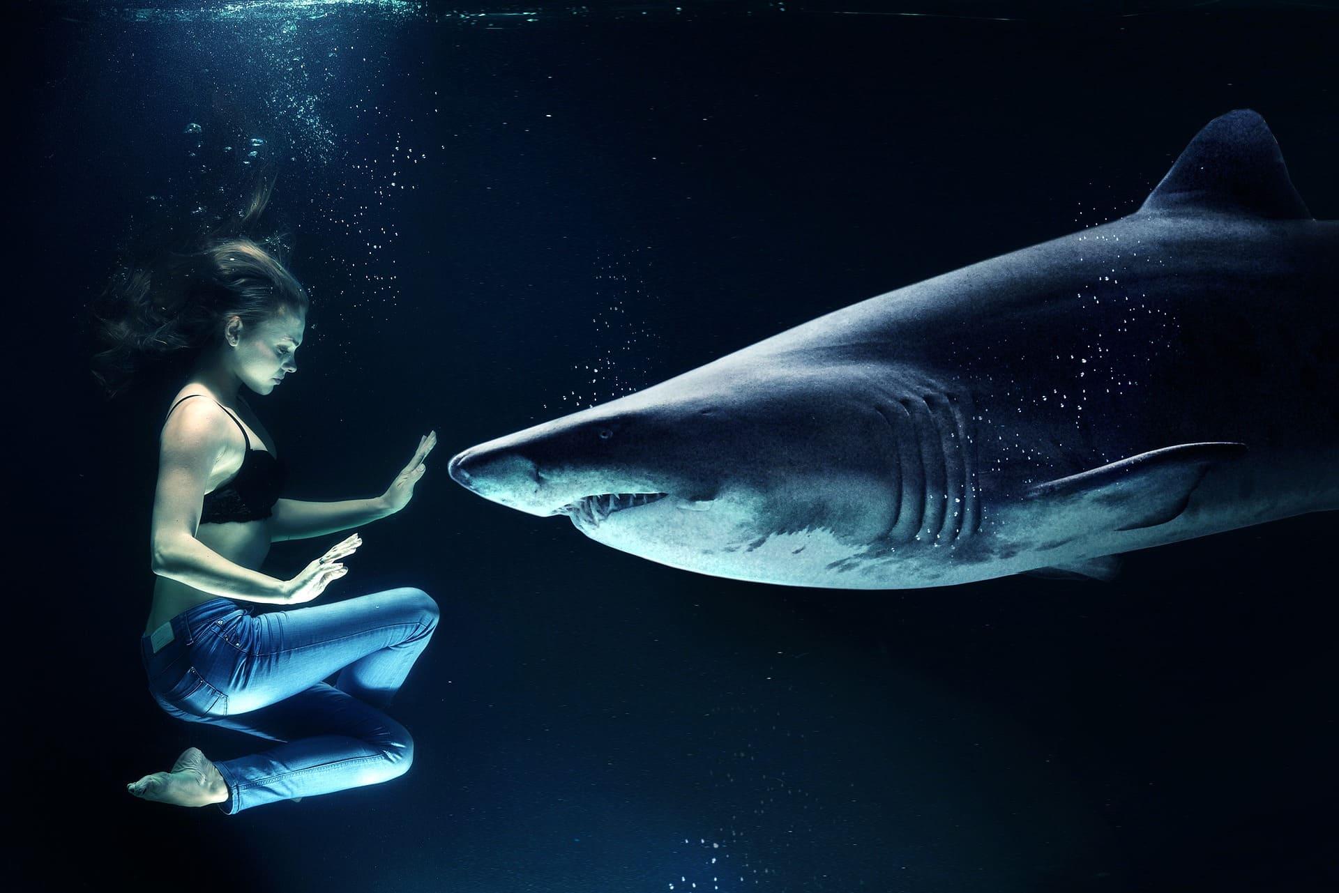 サメが目の前にいても落ち着いている女性